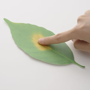 アッシュコンセプト リーフ(leaf)D-710 Lサイズ【インテリア雑貨】の使用画像