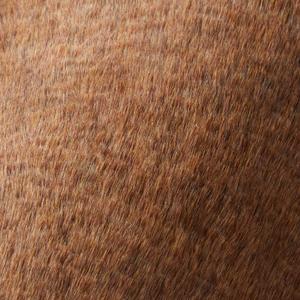 ラグマット キャメル フレーテ(Camel-furete)【円形/四角形/おしゃれ】ブラウンの使用画像
